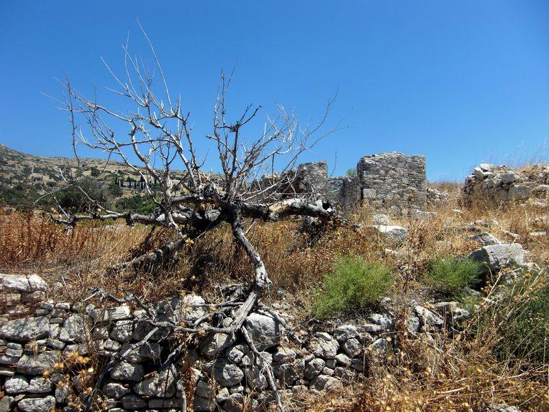 Samos2010 028
