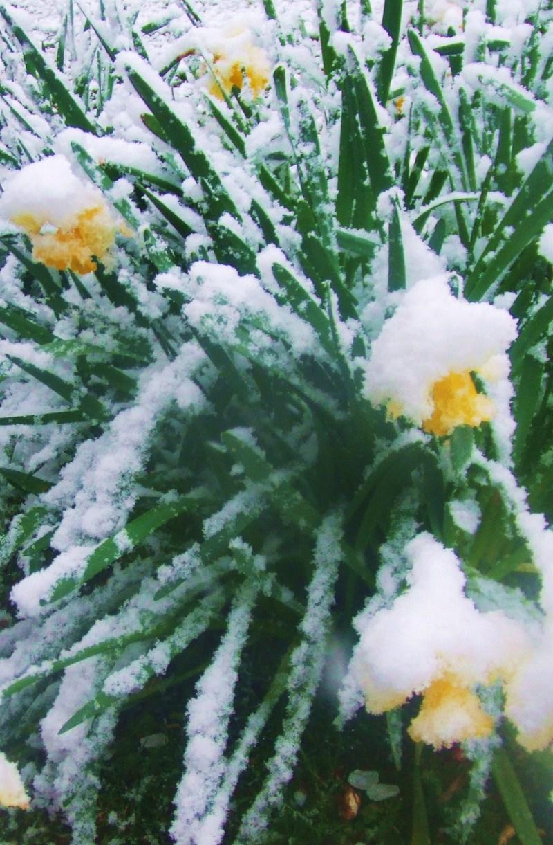 Snow_003_2