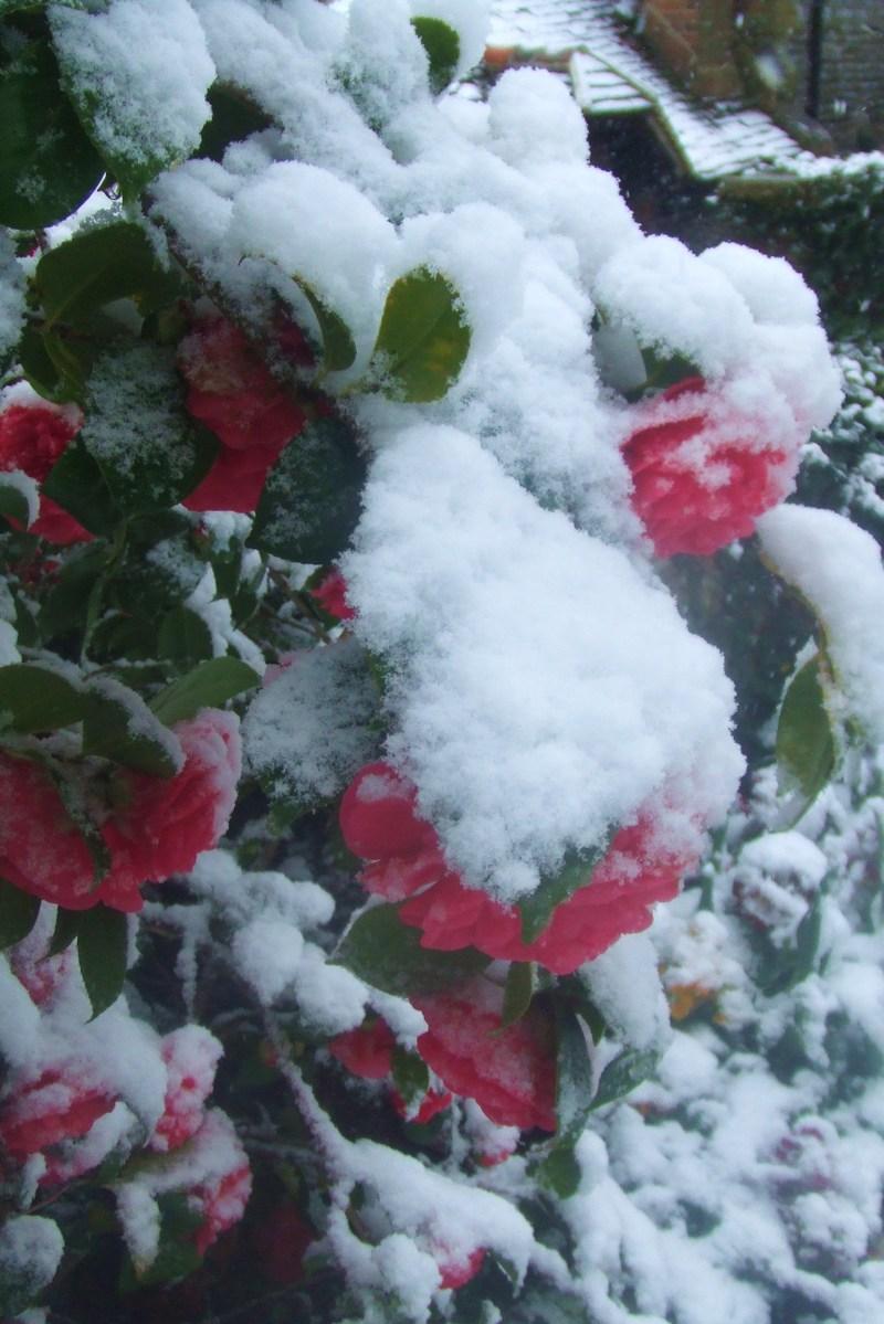 Snow_010_2