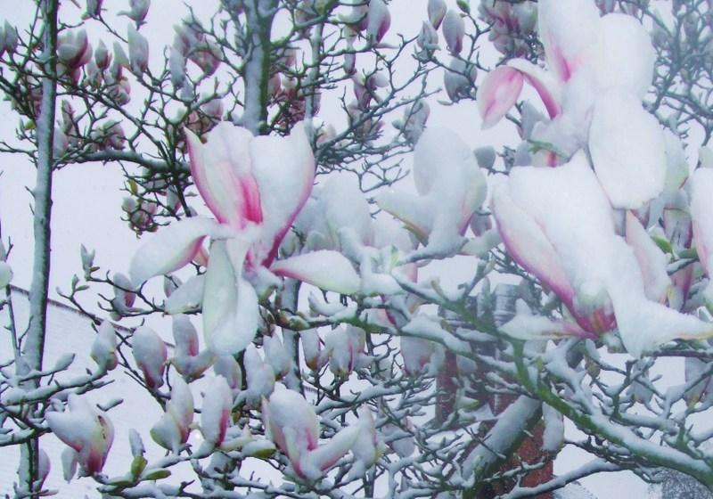 Snow_012_2