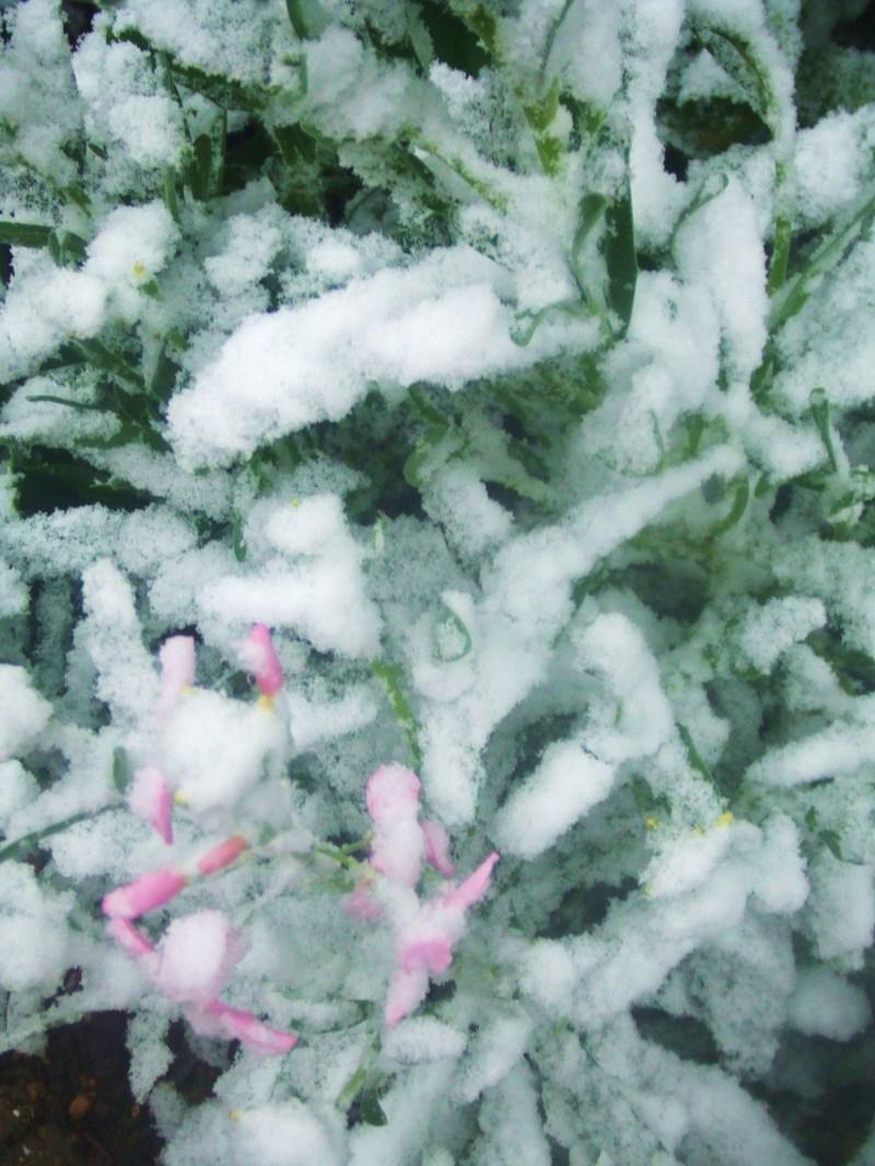 Snow_026_2