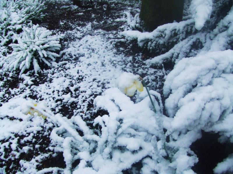 Snow_032_2