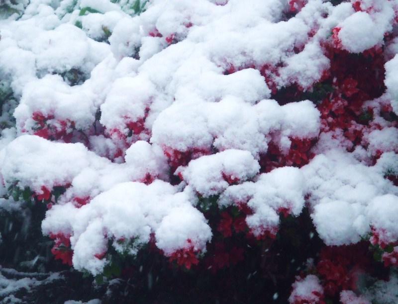 Snow_044_2