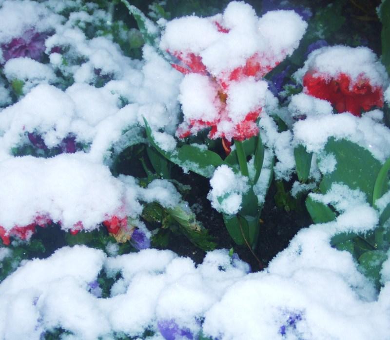 Snow_051_2