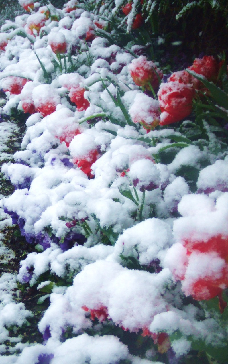 Snow_052_2